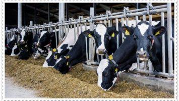Devletten Hayvancılık Desteği Nasıl Alınır? | Devletten Hayvancılık